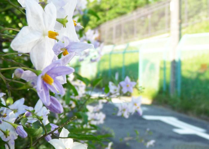 バナナ園 生田ヒルズ施設写真01